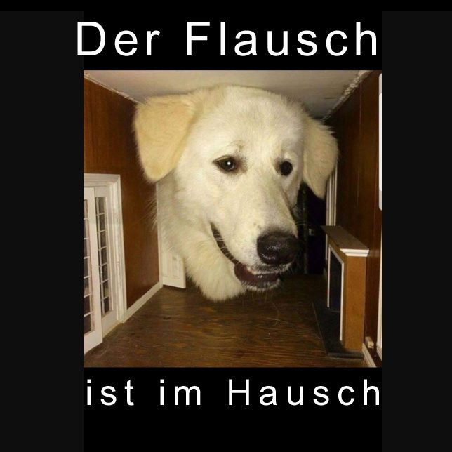 flauschimhausch-9580459-3658929